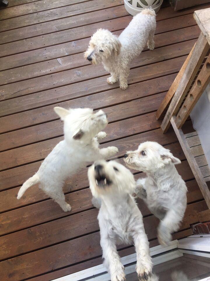 Andet, Hundepasning, dagpleje