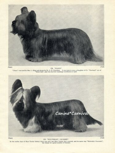 2 SKYE TERRIER NAMED CHAMPION DOG 1934 DOGs ART Photo PRINT