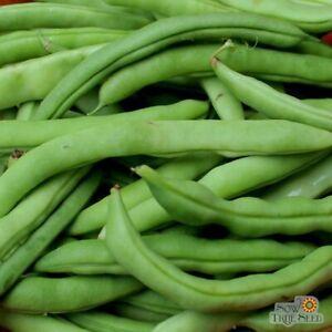 White Half Runner Green Bean Seed 50+ Seeds Free Shipping 85% Germination