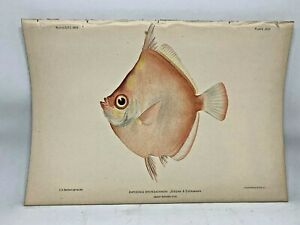 Antique-Lithographic-Print-Reef-Fishes-Hawaiian-Islands-Bien-1903-Plate-45