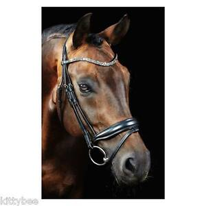 Stunning Waldhausen Dressage Bridle !! Model DRESSY ! NEW! w/ crystals! - Oldenburg, Deutschland - Stunning Waldhausen Dressage Bridle !! Model DRESSY ! NEW! w/ crystals! - Oldenburg, Deutschland