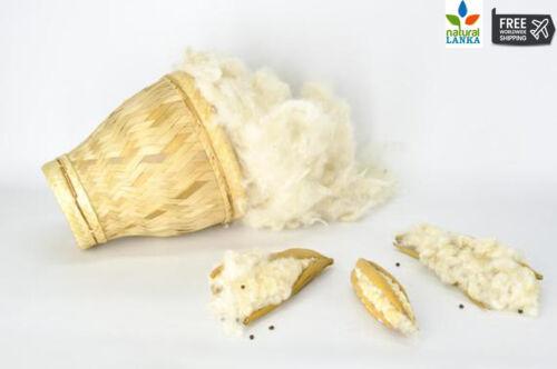 KAPOK Natural Fibers Organic Fibre Cool Cotton Fill Pillows 100/% Natural Kapok