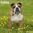 Bulldog Calendar 2017 Avonside Publishing Ltd. 9781782087458