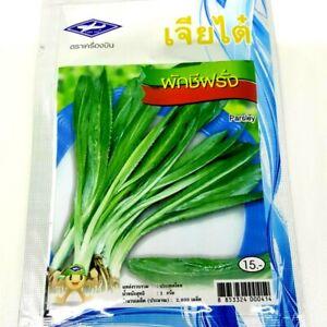 Chia-Tai-Thai-Vegetable-Parsley-Seeds-Culantro-Coriander-plant-Herb-For-Food