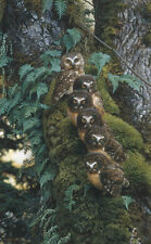 Carl Brenders FAMILY TREE, Saw Whet Owls, Giclee Canvas ARTIST PROOF A/P #6
