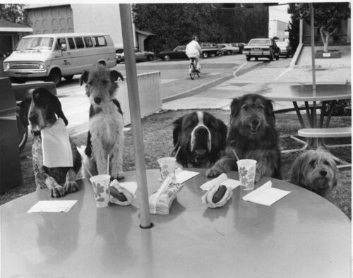 Vintage 1970s Black /& White Photo Funny Dogs Sitting Down To Eat Hot Dogs #45