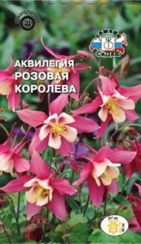 "RUSSIAN AQUILEGIA GRANNY/'S BONNET SEEDS /""PINK STAR/"" BICOLOUR FLOWERS"
