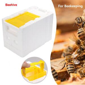 Honey Harvest Bee Hive Beekeeping King Box Pollination Box Foam Frames Case