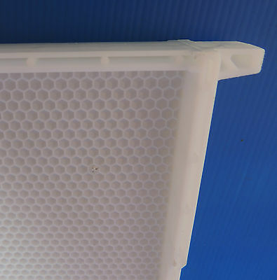 Beekeeping - 20 one piece WHITE PLASTIC BEE FRAMES/FOUNDATION, FD Postage extra