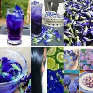 100g-Thai-Dried-Butterfly-Pea-Tea-Flower-Pure-Organic-Natural-Herbal-Blue-D-G5N7