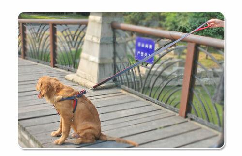 Useful Dog Leash Harness Heavy Duty Denim Collar Set For Small Medium Large Dog