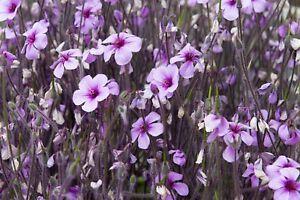 PINK-PURPLE-FLOWERS-MEADOW-CANVAS-PICTURE-PRINT-WALL-ART-UNFRAMED-961