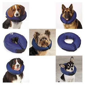 Dog Cone Pet Supplies Plus