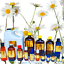 3ml-Essential-Oils-Many-Different-Oils-To-Choose-From-Buy-3-Get-1-Free thumbnail 23