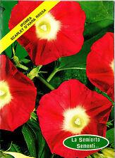 30 Semi/Seeds IPOMEA Scarlet O'hara Rossa