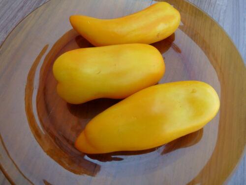 15 graines  tomate BANANA LEGS  Banane Jaune TOMATO Seeds