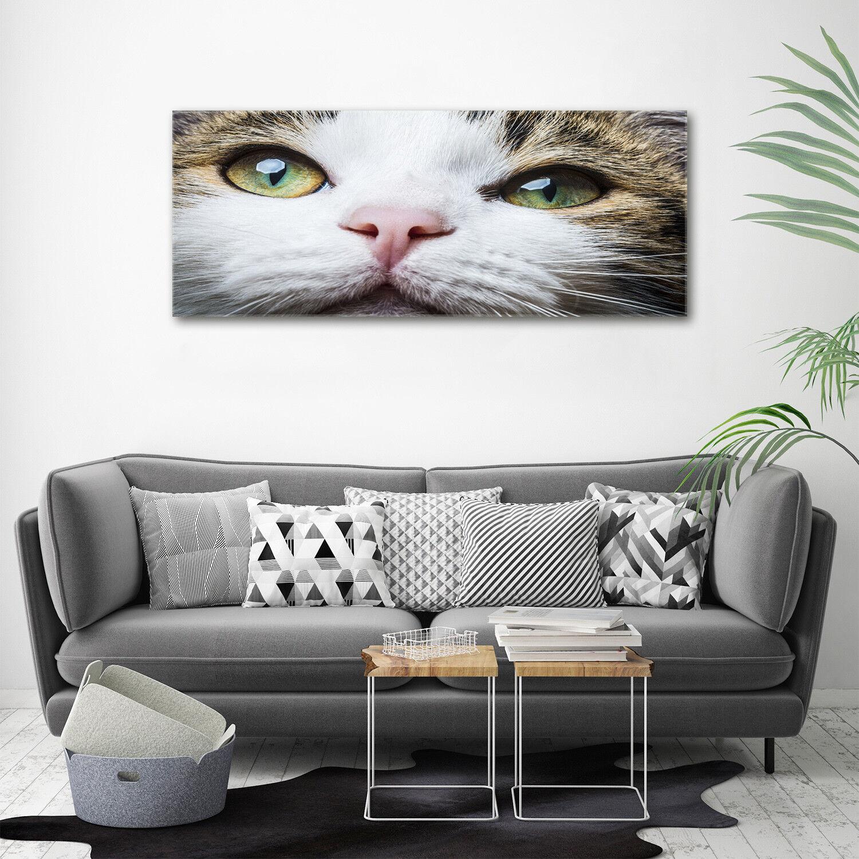 Murales de pantalla de 125 vidrio de la impresión en vidrio 125 de x 50 verde decorativo animales gato ojos de 8fea4f