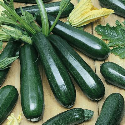 Everwilde Farms Mylar Seed Packet 50 Organic Straight Eight Cucumber Seeds