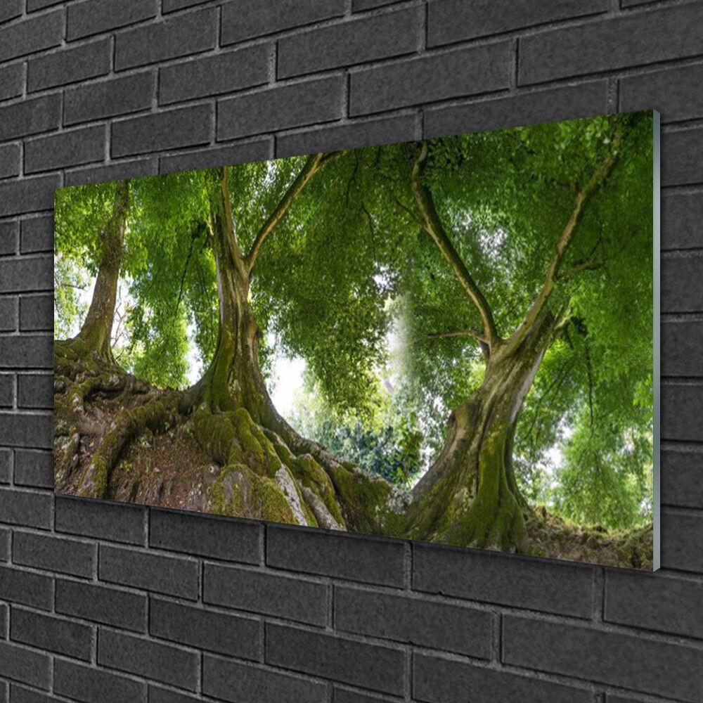 Image sur verre Tableau Impression 100x50 Nature Arbres