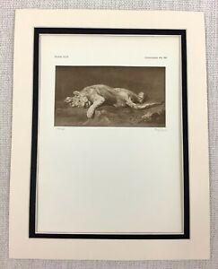 1927-Antico-Stampa-Olandese-Vecchio-Master-Leonessa-At-Play-Pittura-Peter-Paul