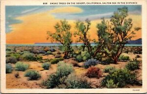 Vtg 1930s Smoke Trees in Desert, Salton Sea California CA Postcard