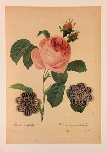 VTG Botanic Art Print Redoute Engraving Repro ROSE ROSES *** SEE VARIETY
