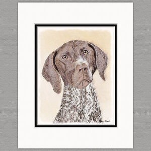 German-Shorthaired-Pointer-Original-Print-8x10-Matted-to-11x14