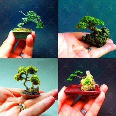100 pcs//bag Miniature Pine Japanese Ornamental Potted Pine Seeds Bonsai Tree For