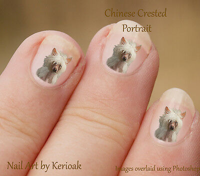 Chinese Crested Portrait,   24 Unique Designer Dog Nail Art Stickers Decals