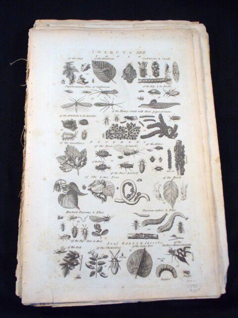 Ten Folio Sheets Cyclopaedia - Engravings - 1790 - Isaac Taylor (1730-1829)