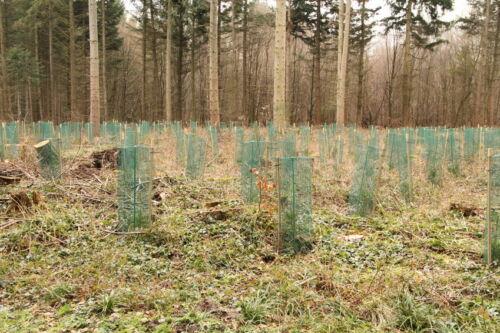 Baumschutzhülle Schutznetz Baumhülle HaGa® 17g//m² Länge 50m Masche 3mm Ø 150mm