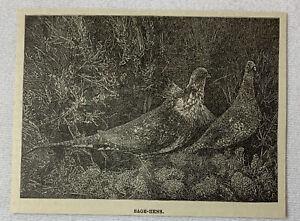 1885-Rivista-Incisione-Sage-Galline