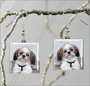 DOG-SHIH-TZU-BREED-SQUARE-GLASS-CABOCHON-EARRINGS-hy54ed