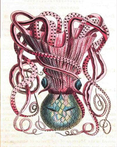 A1 A2 A3 A4 A5 Vintage Octopus illustration Vintage Art Print Poster