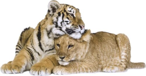 WALL STICKERS Cat TIGER tigers Wild Animal CATS Vinyl Decal Mural Art Sticker