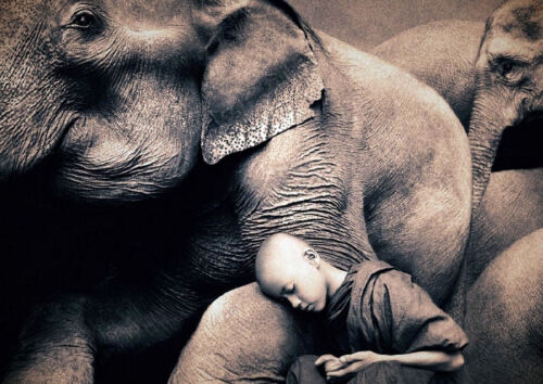 Picture Buddha Buddhist A3 Poster Shaolin Monk Boy Sleeping with Elephants