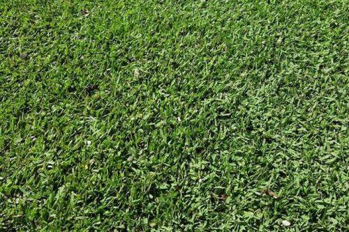 Turf Empire Zoysia 55m2