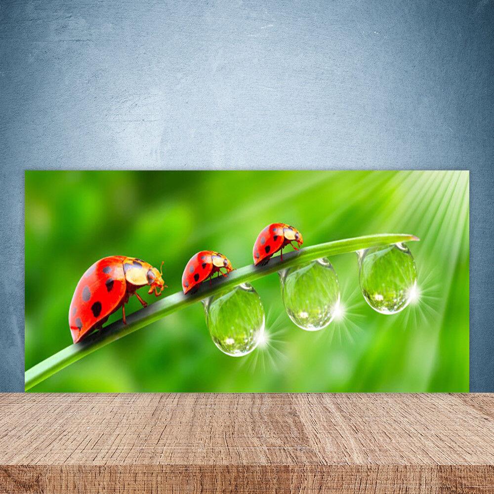 Crédence de cuisine en verre Panneau Paroi 100x50 Floral Herbe Coccinelle Rosée