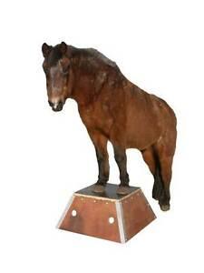 Po01l Pferde Podest Pferdepodest Bodenarbeit Zirkus Podest