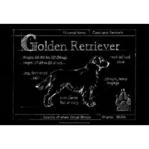 Blueprint Golden Retriever by Eathen Harper Dog Print 19x13