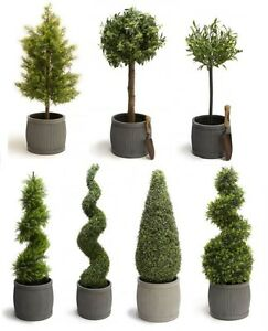 Image Is Loading Luxury Artificial Topiary Trees Cypress Buxus Swirl Cone