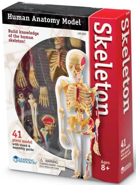 Learning Resources Anatomical Human Skeleton Educational Model Ebay