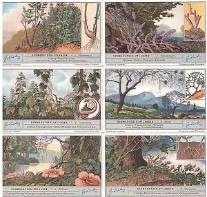 Liebig-Bilder-Serie-1031-034-Das-Papier-034-Deutsch