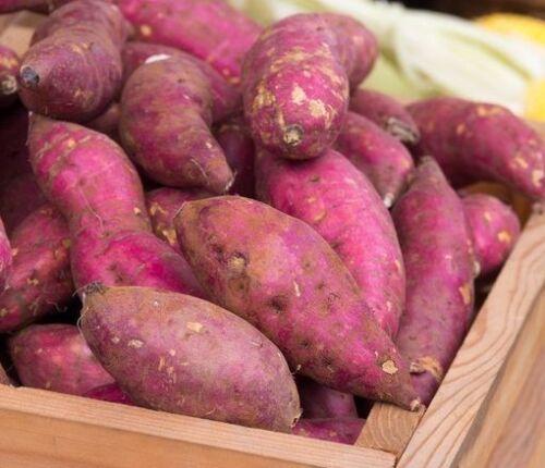 Korean BIANCO CARNE Sweet Potato Organic tubero per piantare meglio che scivola