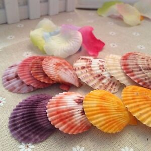 20X-Colorful-Seashells-Crafts-Decorations-Scallop-Shells-Nautical-Decor-3-6cm