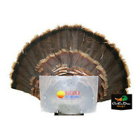Mojo Outdoors Turkey Fan Press Trophy Mount Hunting Decoy Blind Hide