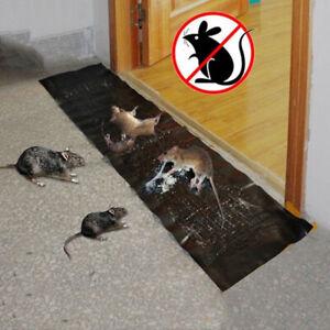 taille-des-pieges-a-colle-conseil-les-souris-souris-serpent-d-039-insectes-un-rat