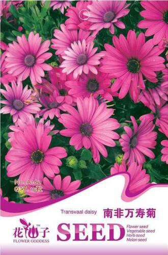 Original Package 15 Transvaal Daisy Seeds Osteospermum A162