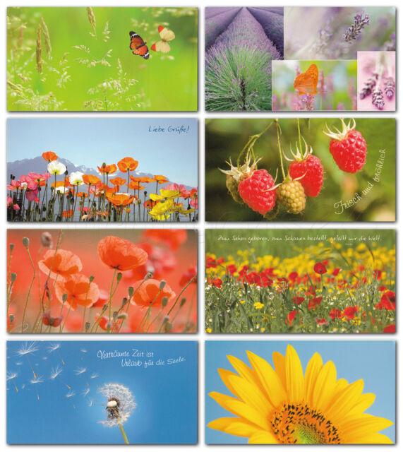 48 Grußkarten Postkarten 8 Motive Top Ware Sort.7