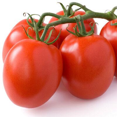 VEGETABLE GARDENING SEEDS NON-GMO BEST BOY BUSH F1 HYBRID TOMATO ~30 SEEDS